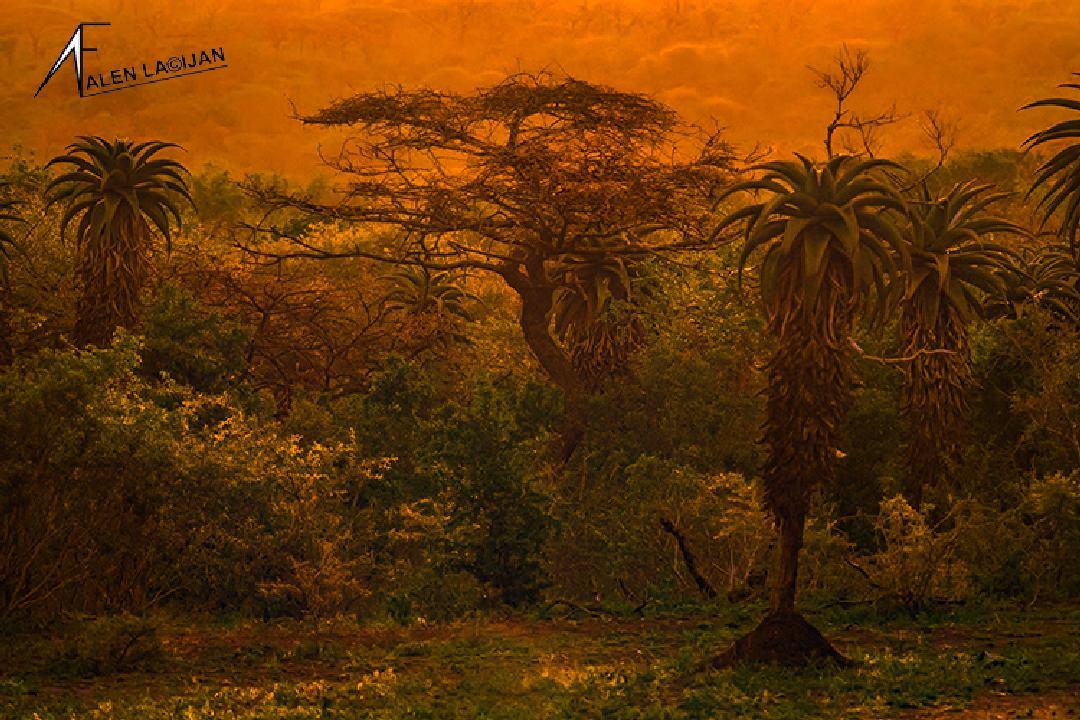 Južna Afrika 08
