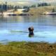 ZDA - Yellowstone 9