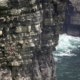 Gnezdišča v klifih - zahodna obala Irske